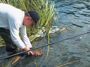 животные насадки богатые белком для ловли рыбы