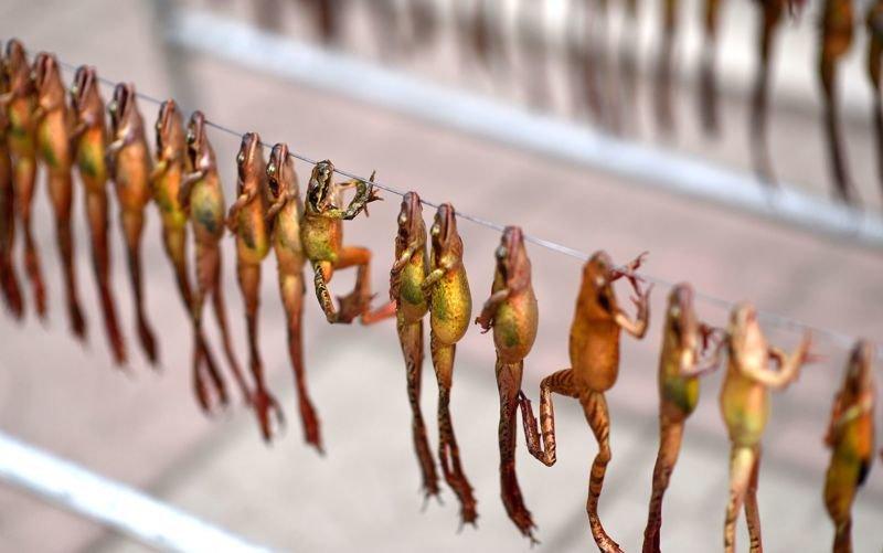 Цена вечной молодости: китайцы истребляют лягушек для приготовления снадобья красоты