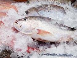 Ученые создали съедобную пленку для защиты замороженной рыбы от опасных бактерий