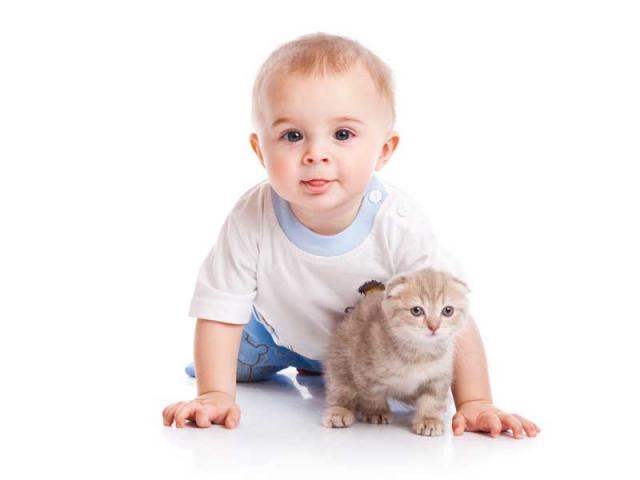 Когда в дом можно приводить кота?