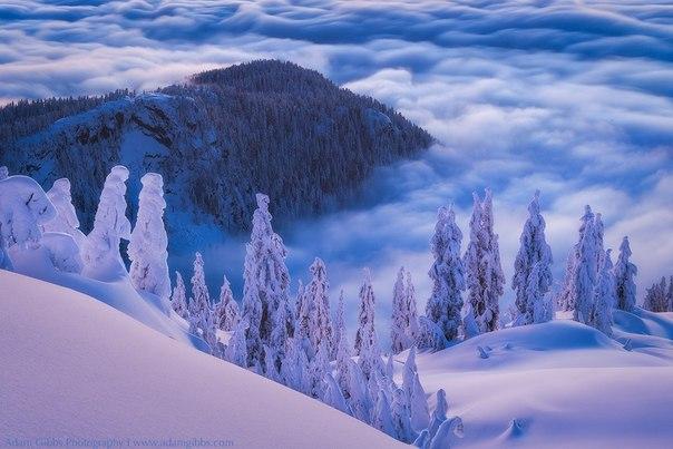 Мощь, нежность и красота природы в фотографиях