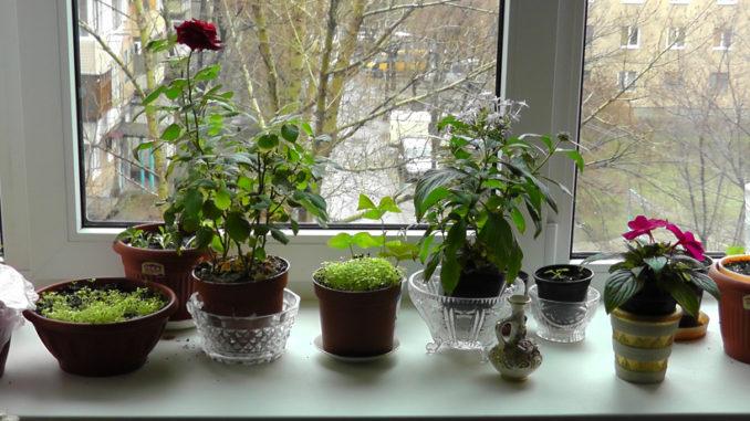 Немедленно уберите эти цветы из дома: они приносят только беду и смерть