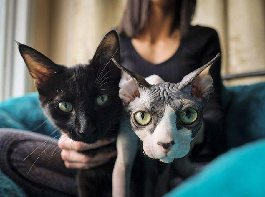 Как продать кота втридорога? Побрить его!