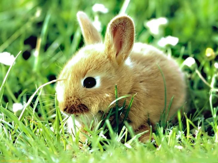 Животные запреты, интересное, подарки, полезное, примете