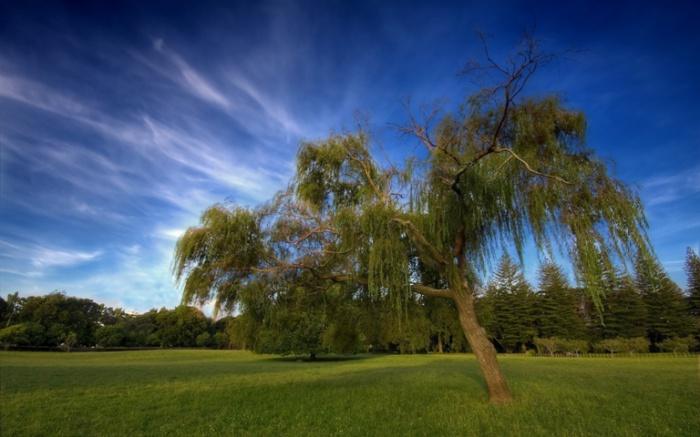 Деревья. Новая Зеландия.