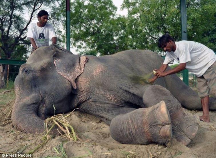 Radga11 Спасение слона, проведшего 50 лет в неволе, который плакал от счастья
