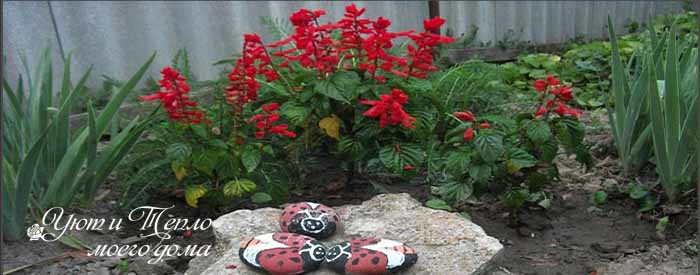 Красивые огненные цветы сальвия: посев на рассаду, уход