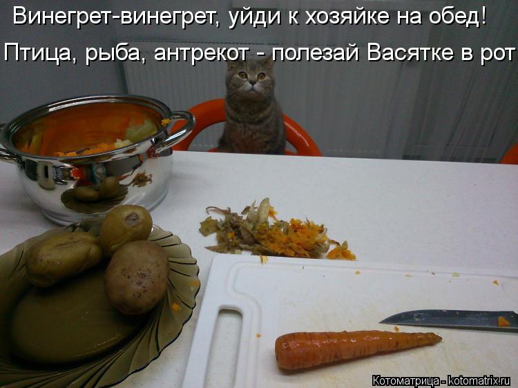 Котоматрица: Винегрет-винегрет, уйди к хозяйке на обед! Птица, рыба, антрекот - полезай Васятке в рот!