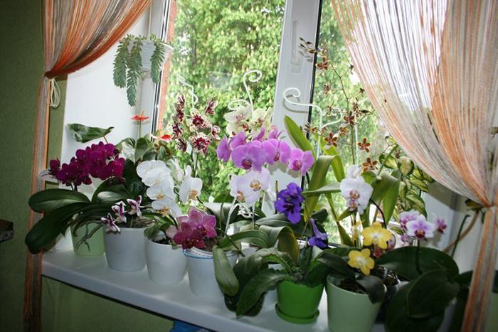 Экстренная реанимация орхидеи! Если взять в руки активированный уголь и…