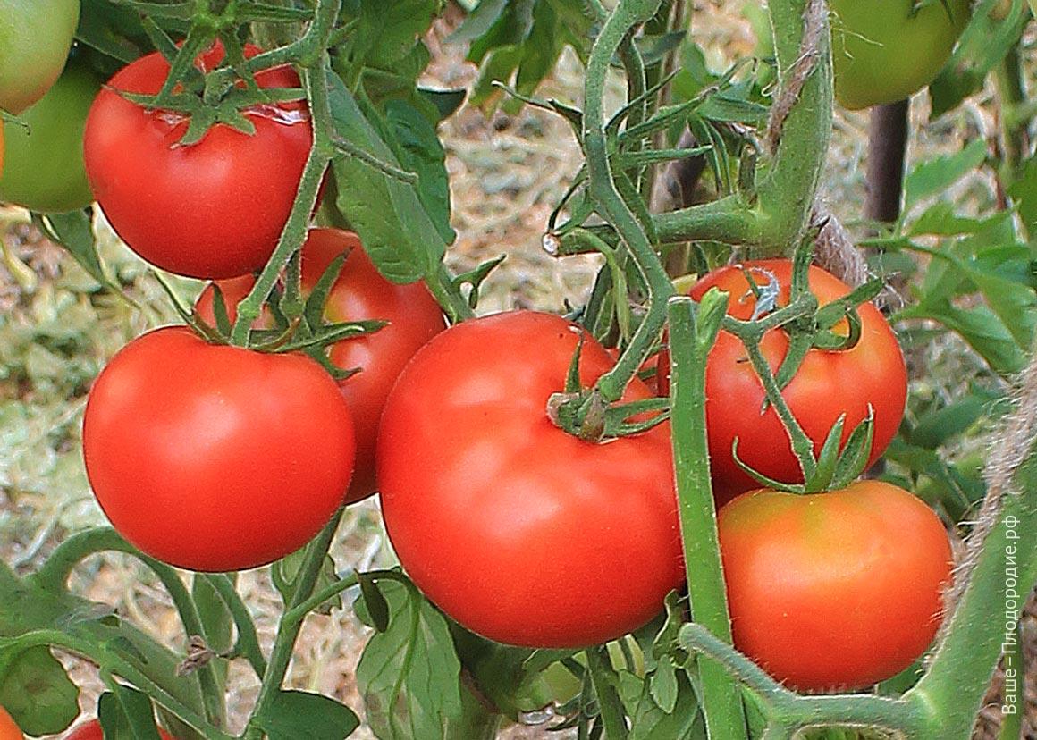 От чего зависит вкус томатов