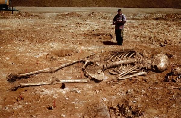 Наши предки были гигантами