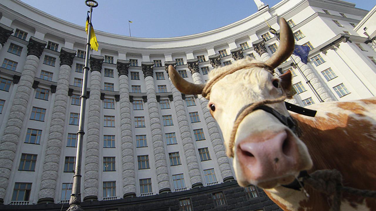 Не молоком единым. Готовится запрет и на закупку домашнего мяса. «Страна», Украина