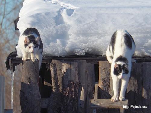 Котики празднуют свой первый март