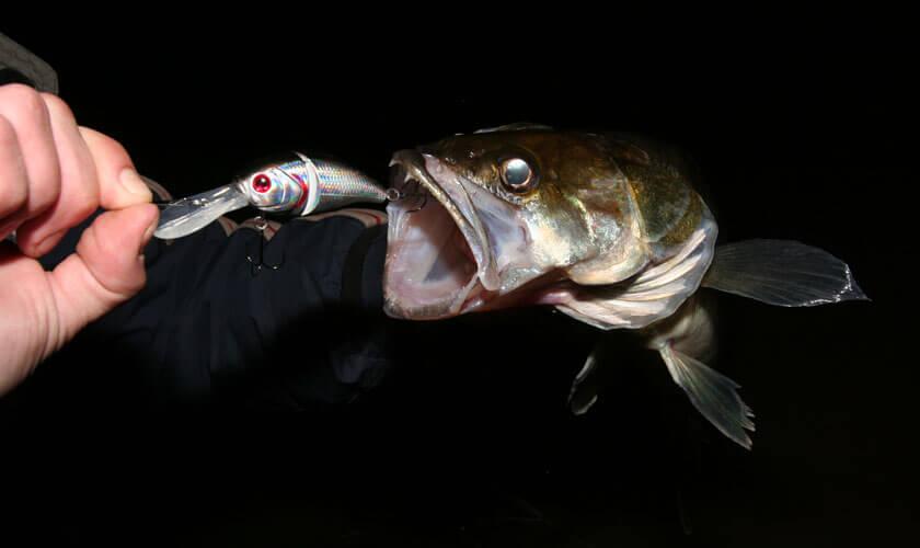 рыбалка на карася и судака
