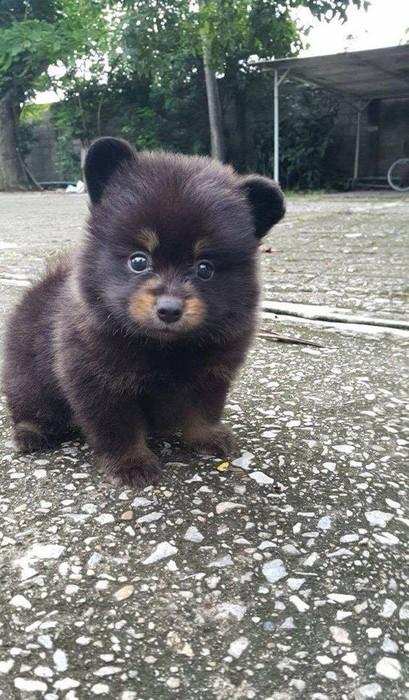 Медведь или собака: в Сети л…