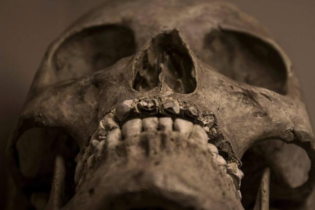 13 черепов