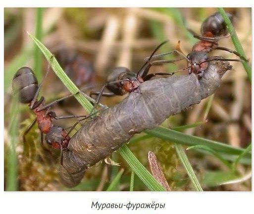 Гибель муравейника, как пример для человеческой цивилизации!