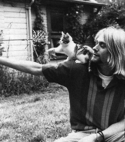 cobain-cat