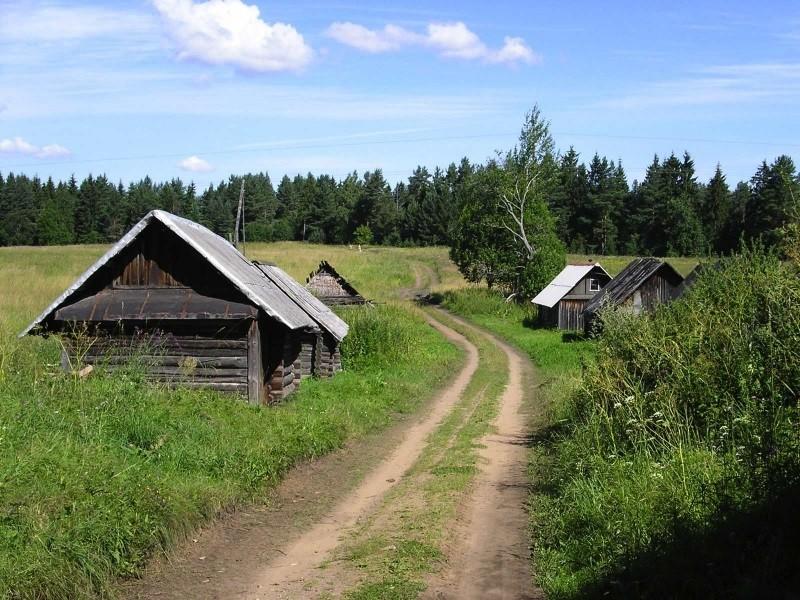 Кабан Васька, деревня, кабан, подкормили