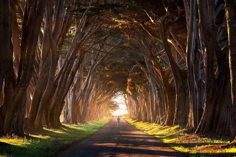 Кипарисовый тоннель, Калифорния, США Северная Америка, путешествие, фотография