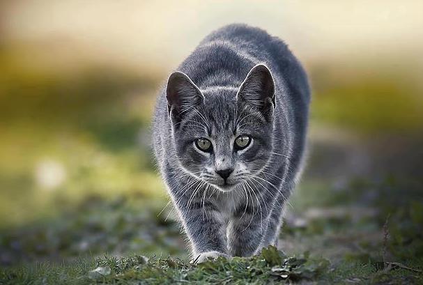 Призрак брошенной кошки
