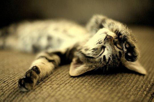 Фото «Как в таких позах можно заснуть?»