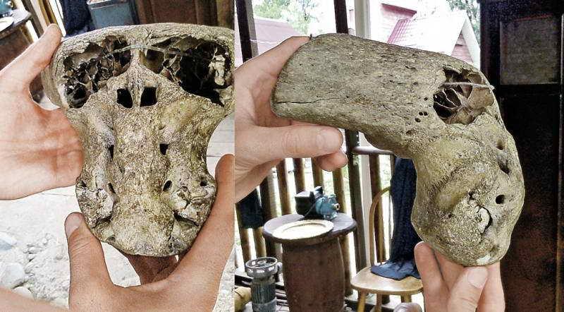 Странный череп в экспедиции Аненербе