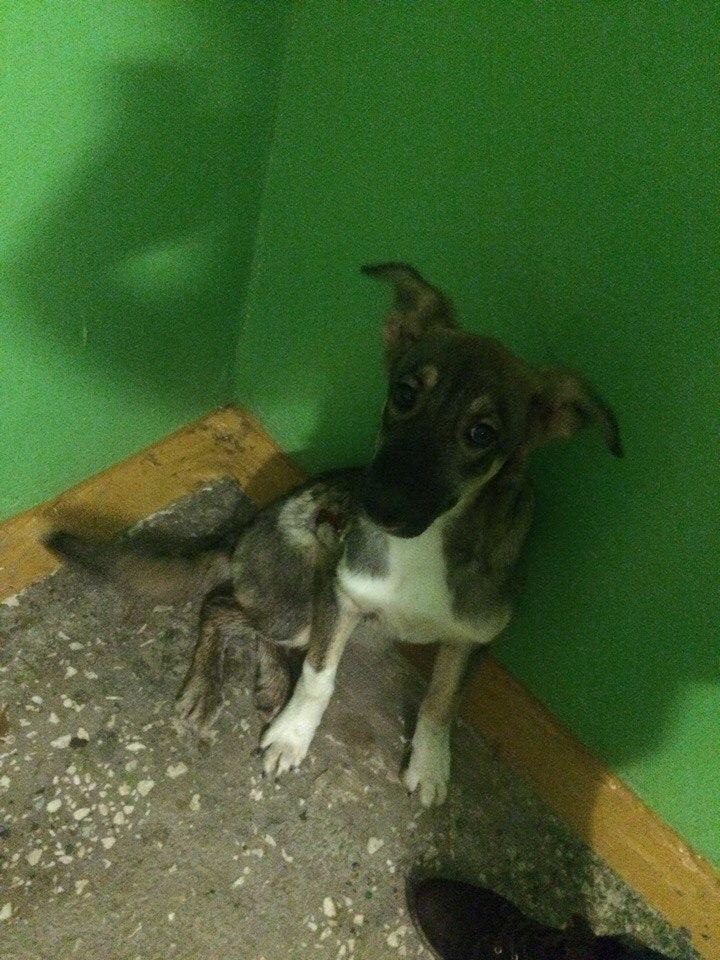 Раненая собачка в подъезде Оренбурга! Помогите ей кто-нибудь!