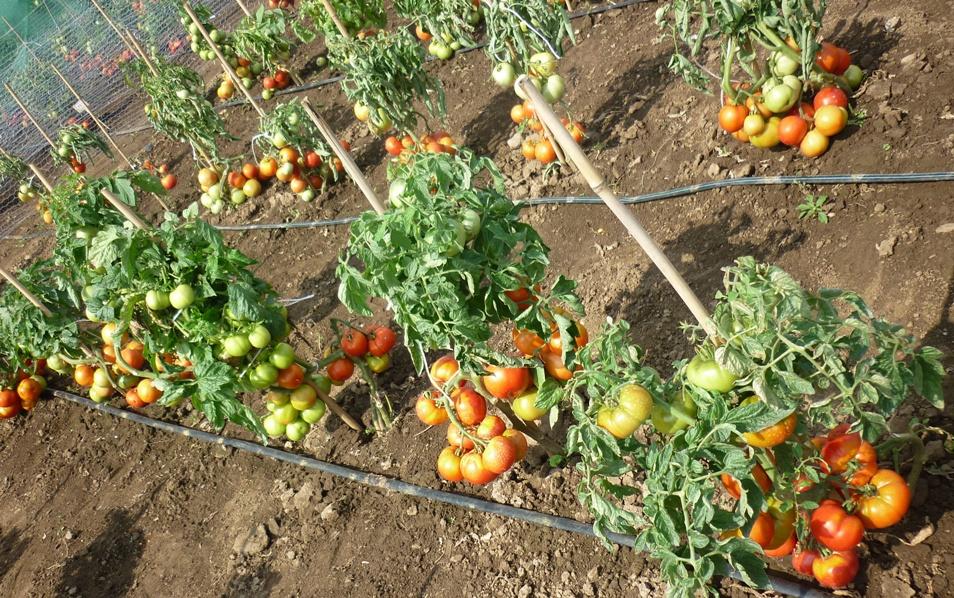 Подлива из помидоров - рецепт с фото