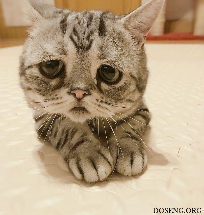 Луху — самая грустная кошка …