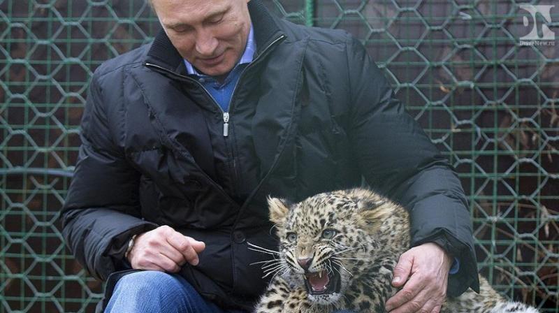 Понты понтами, но животное не обманешь))