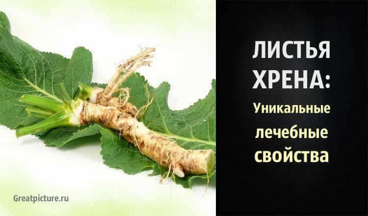 Листья хрена: уникальные леч…