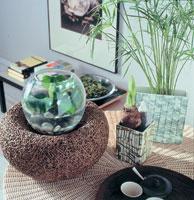 Хотите жить долго - заведите комнатные растения!