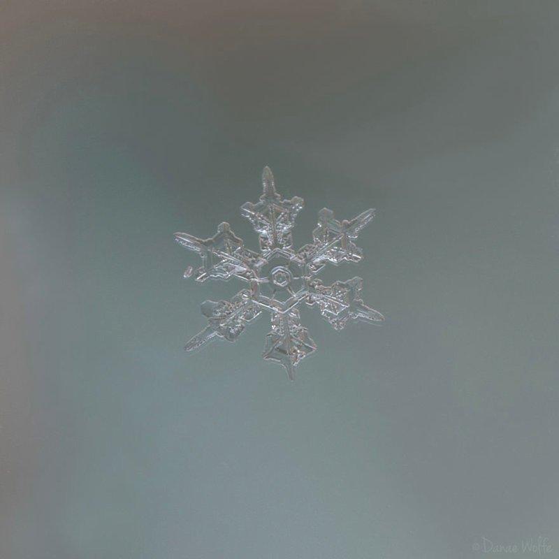 Как сфотографировать снежинку? Фотограф рассказала о секретах макро-фото снежинок интересное, макро, макро-съемка, полезное, снежинка, советы, фото, фотография