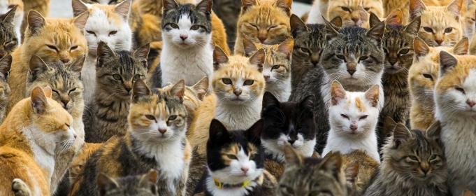 Невероятный остров кошек в Я…