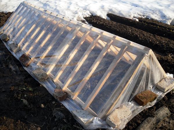 Парник из деревянных решеток очень прост в сборке. Автор фото Марина Герасименко