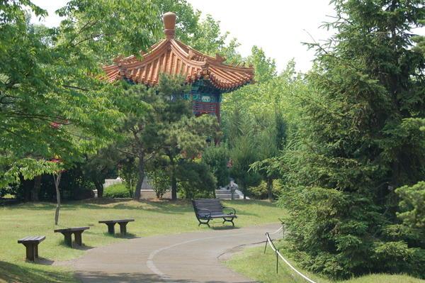 Нимфеи и лотосы (IIsan  Lake Park)