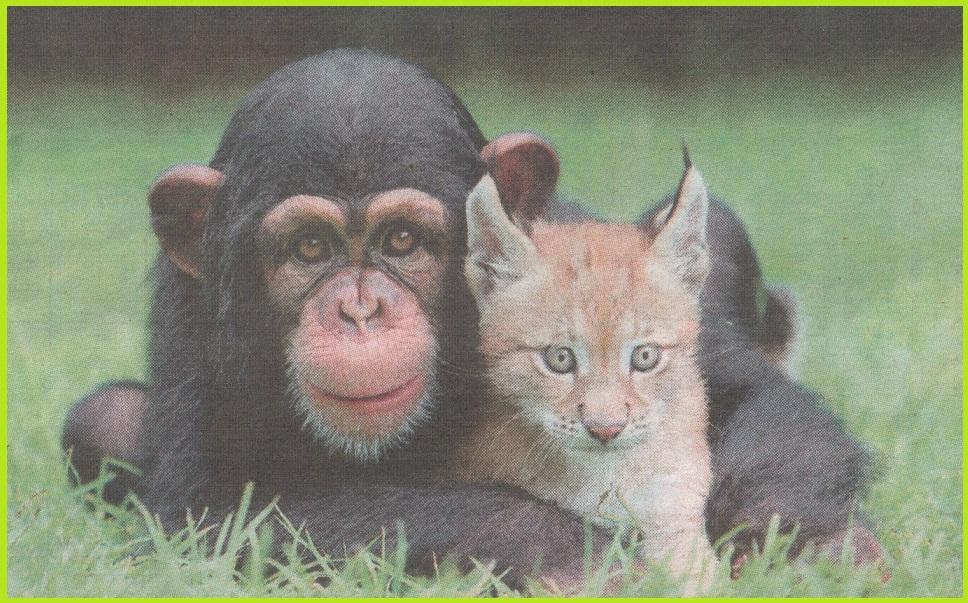 обои для рабочего стола животные 1680х1050 № 636149 бесплатно