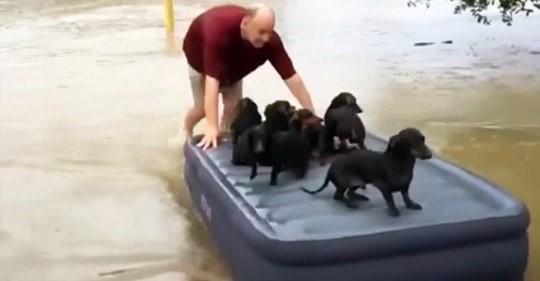 Мужчина пожертвовал своим имуществом, чтобы спасти десять щенков от наводнения