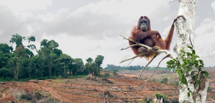 Уничтожение лесных насаждений во всём мире способствует распространению вирусов