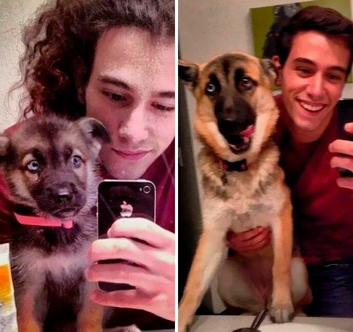 50 собак, которые повзрослели вместе со своими хозяевами