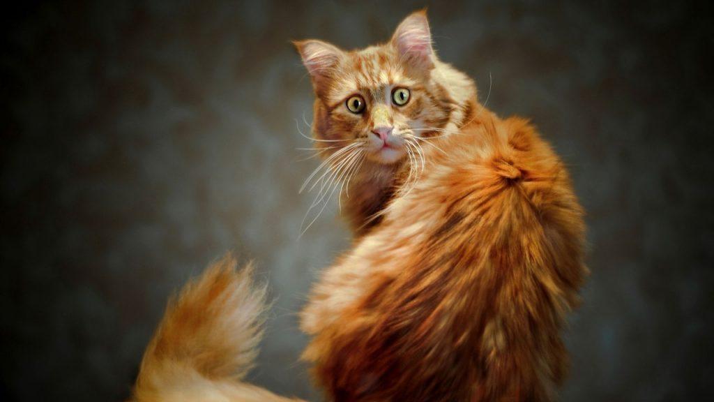 Как взвесить кота