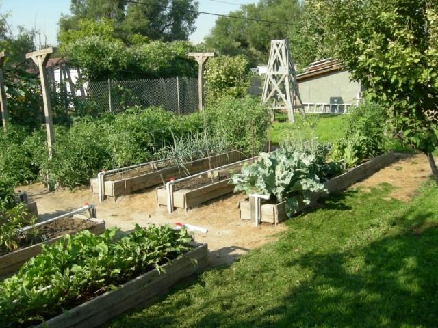 Основы огородничества по Миттлайдеру: таких урожаев у меня не было никогда!