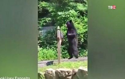 В камчатском поселке Начики поселились бурые медведи