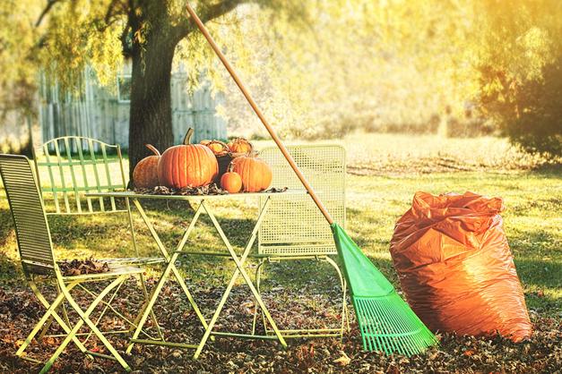 Какие работы проводить в саду и огороде в ноябре?