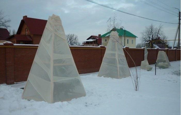 Вот как утеплить сад на зиму. Полезные советы