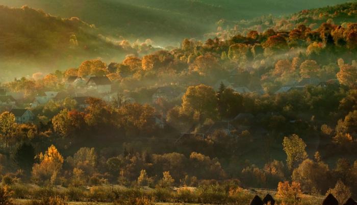 Единственное место - это Карпатские горы, где леса растут уже много веков.