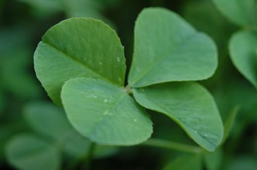 растения-обереги - Самое интересное в блогах
