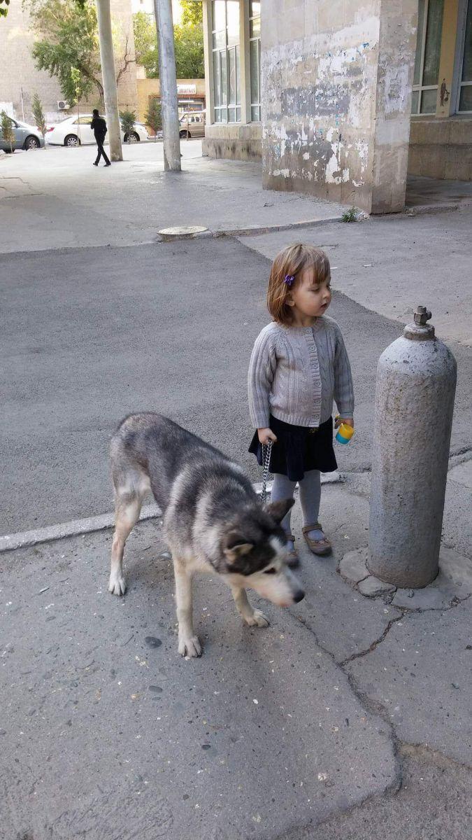 Из проезжавшего на скорости автомобиля, прямо на проезжую часть, выбросили собаку...