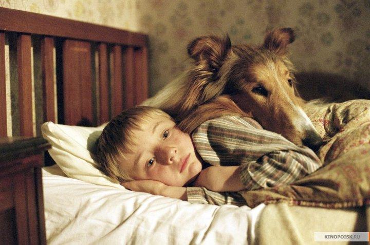 Психолог: почему человеку проще любить собаку, чем другого человека